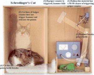 scrodinger cat foto
